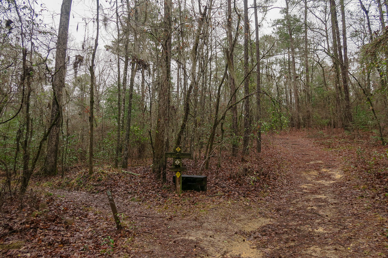 Scout Loop/Palmetto Trail Junction