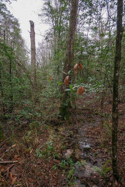Hart Creek