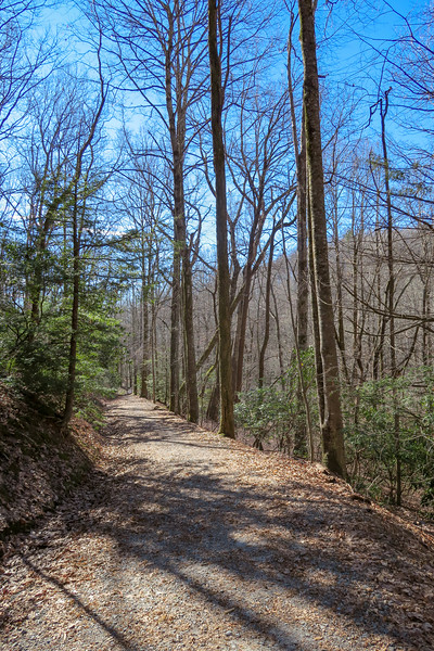 Raven Cliff Falls/Foothills Trail -- 2,960'