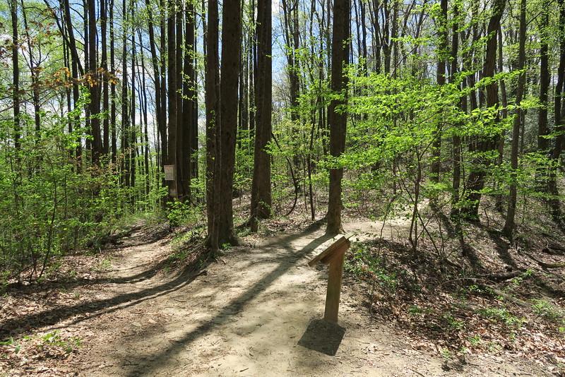Raven Cliff Falls-Dismal Trail Junction