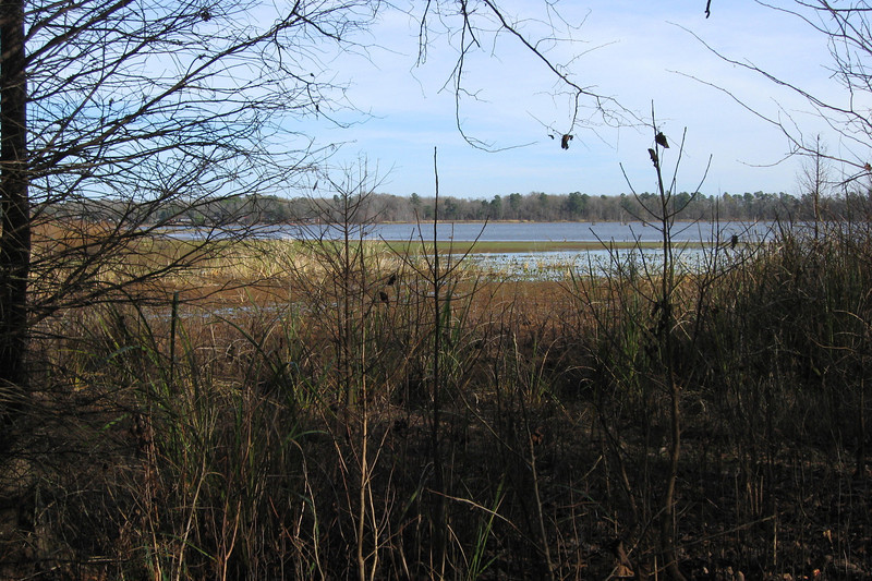 As I've mentioned a few times, the Bluff Unit sits encompasses a narrow peninsula on the eastern shore of Lake Marion.  The eastern portion of the trail follows a small inlet known as Cantey Bay.  I had hoped to see a few water birds along this stretch but things were strangely quiet...