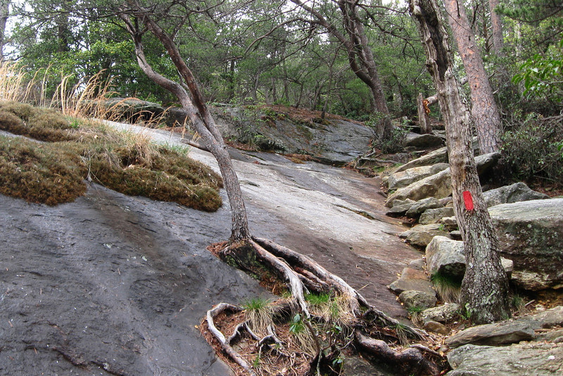 The tree growing out of the rock, the huge stone steps, the huge granite slab...loving it...