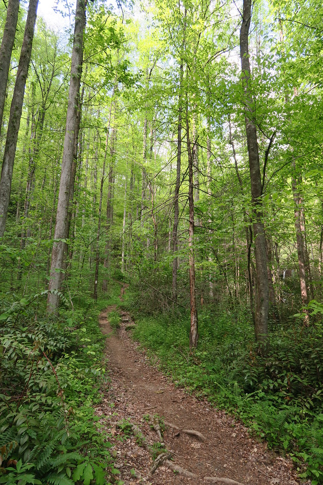 Virginia Hawkins Falls Trail - 1,680'
