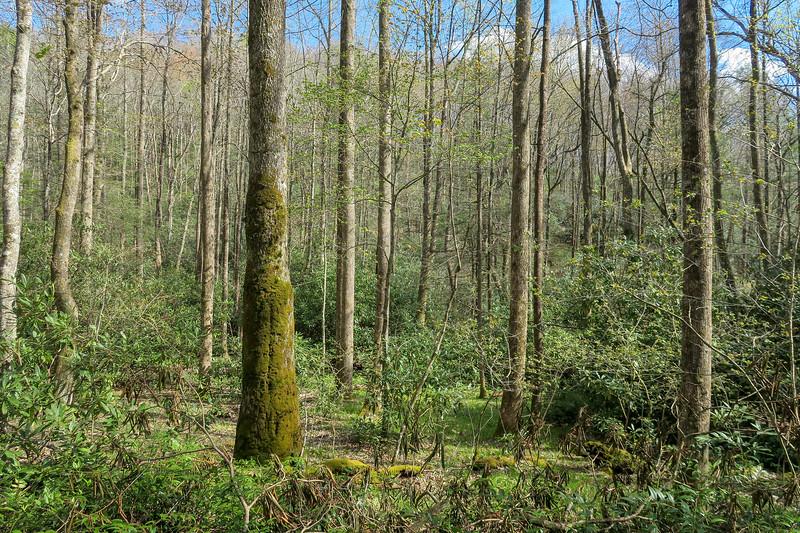 Foothills Trail Spur -- 2,850'