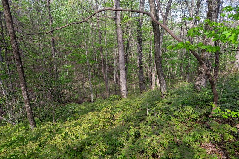 Naturaland Trust Trail -- 2,970'