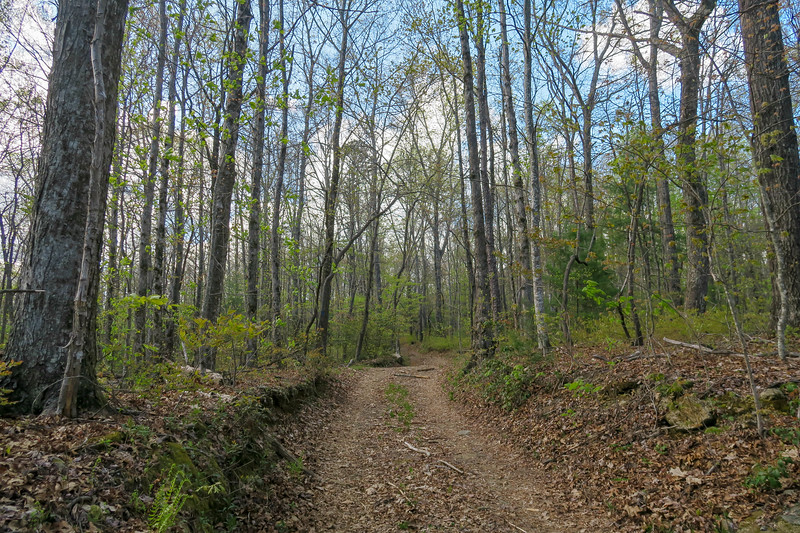 Foothills Trail Spur -- 3,000'
