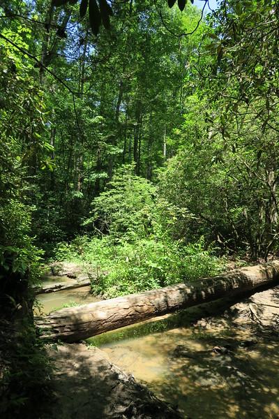 Yellow Branch Falls Trail