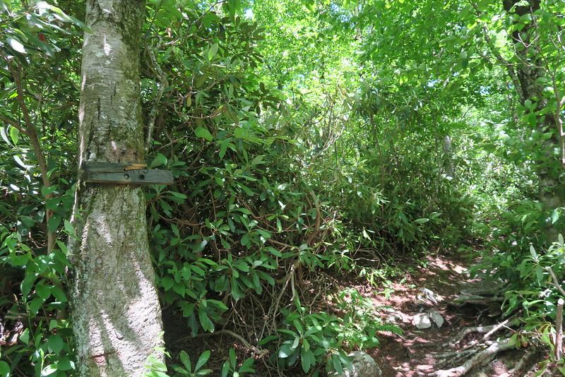Appalachian Trail-Blackstack Cliffs Spur Junction - 4,440'