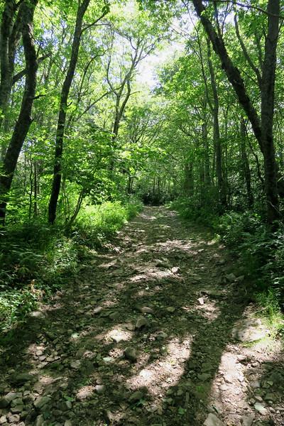 Jones Meadow-Appalachian Trail Access Path/Road - 4,430'