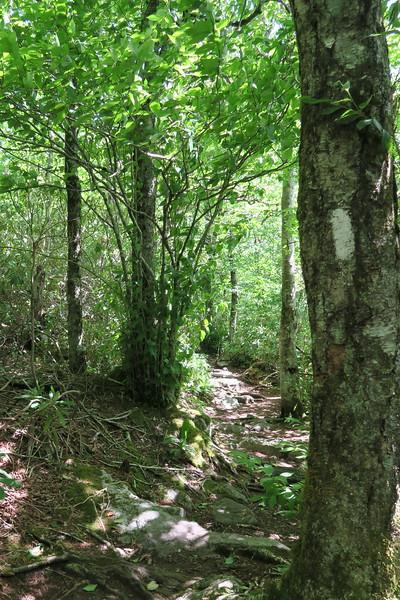 Appalachian Trail Access Path-Appalachian Trail Junction - 4,440'