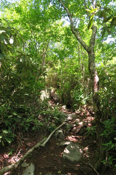 Blackstack Cliffs Spur Trail - 4,450'