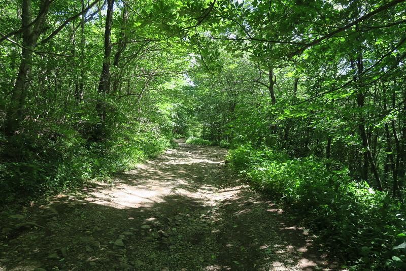 Jones Meadow-Appalachian Trail Access Path/Road - 4,400'