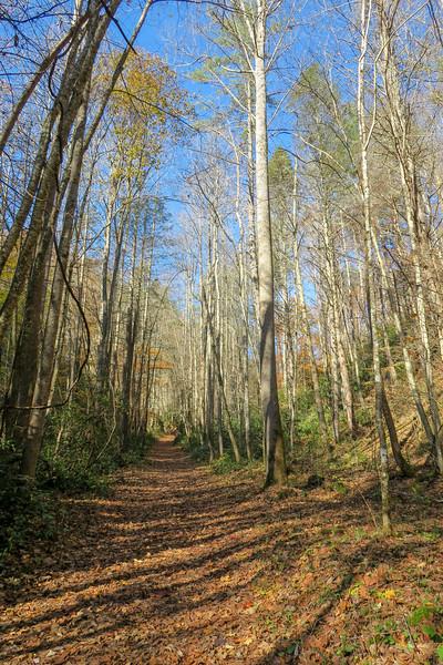 Rocky Fork Trail -- 2,440'