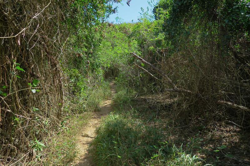 Hams Bluff Trail -- 70'