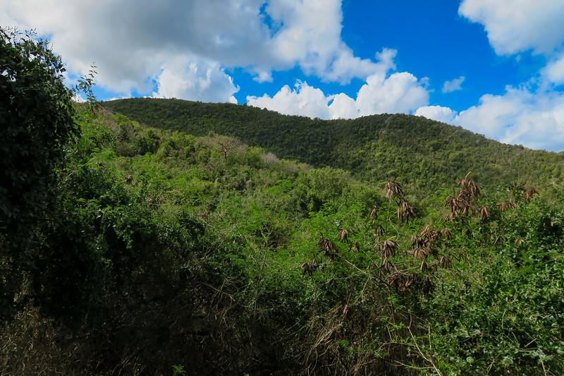 Hams Bluff Trail -- 200'