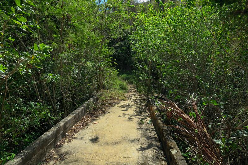 Hams Bluff Trail -- 50'