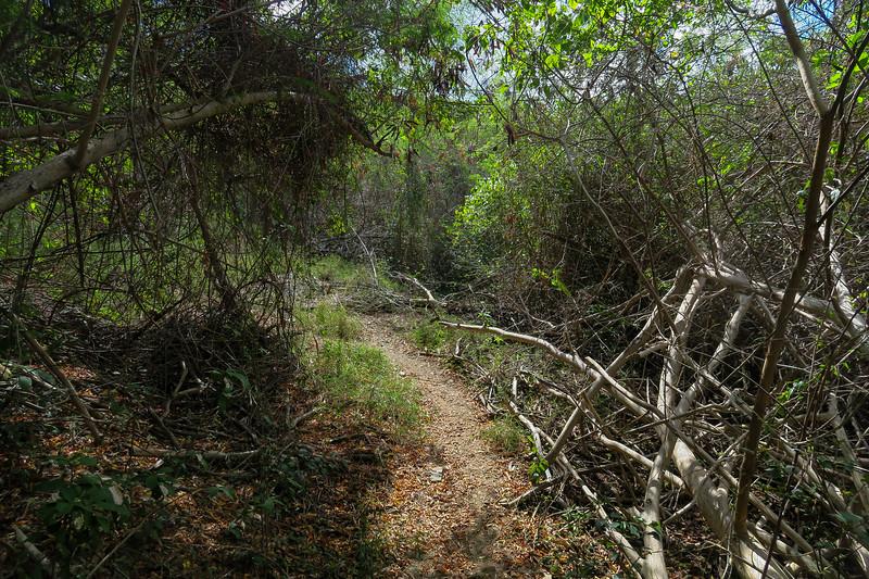 Hams Bluff Trail -- 100'