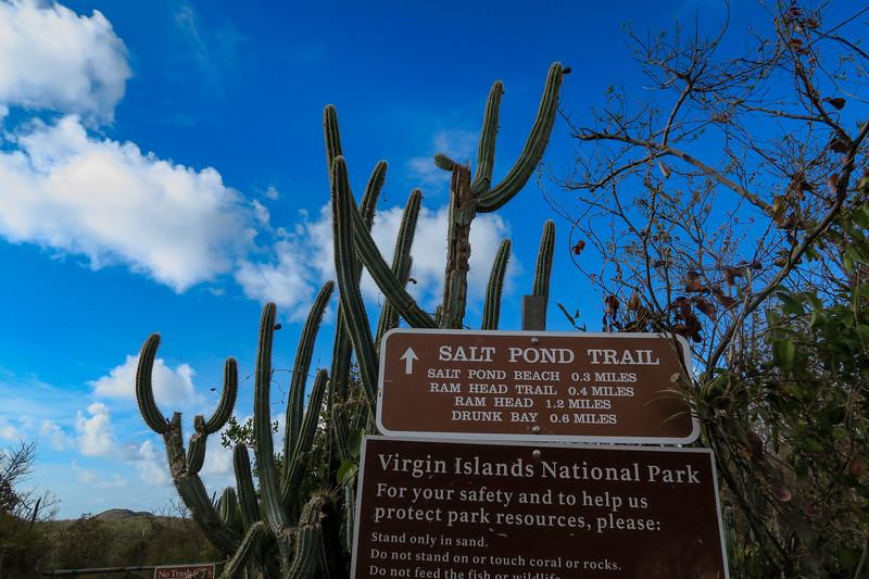 Salt Pond Trailhead -- 100'
