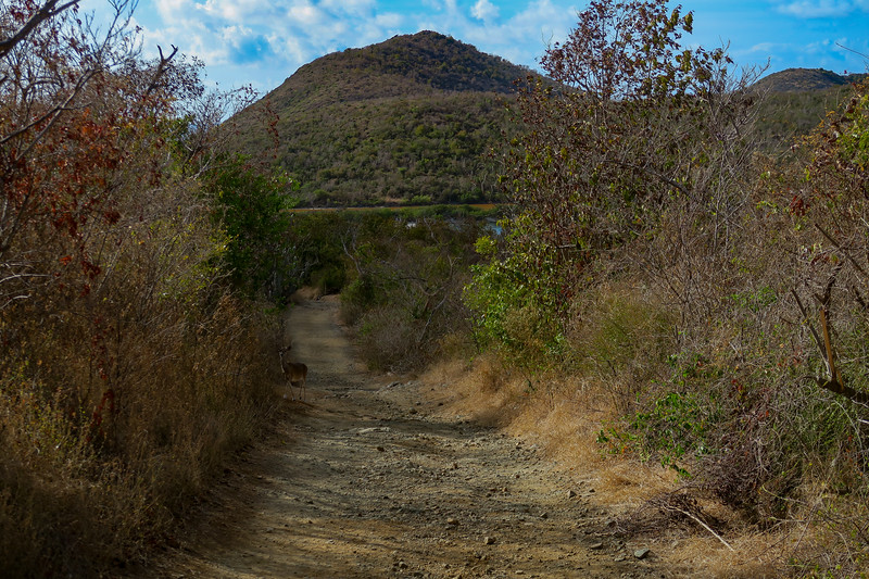 Salt Pond Trail -- 80'