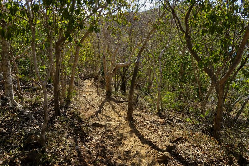 Ram Head Trail -- 40'