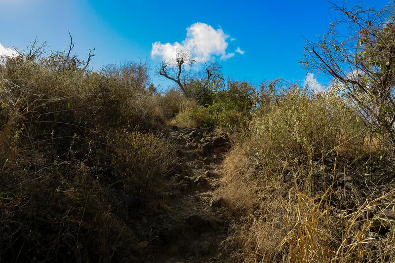 Ram Head Trail -- 20'
