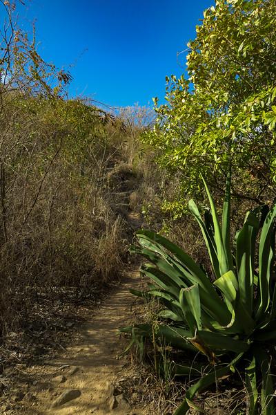 Ram Head Trail -- 5'