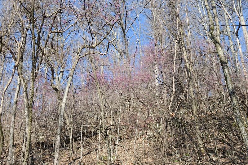 Ewing Trail - 2,200'