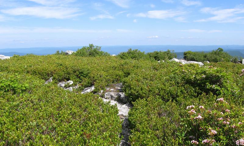 Bear Rocks Preserve