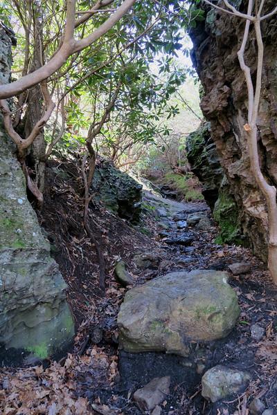 White Rocks Overlook Trail - 3,320'