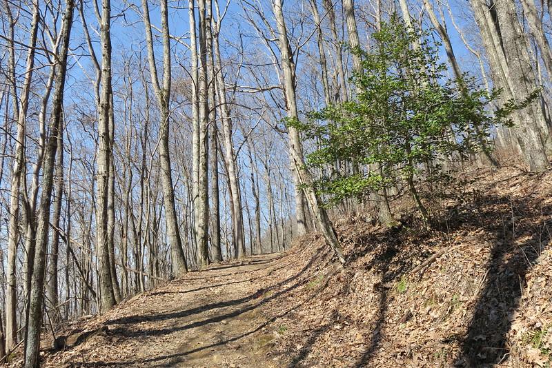 Ewing Trail - 3,000'