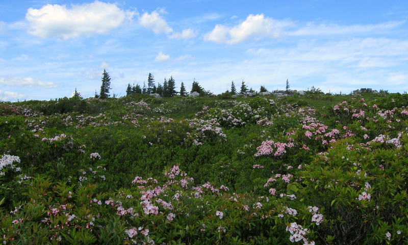 Dolly Sods Wilderness
