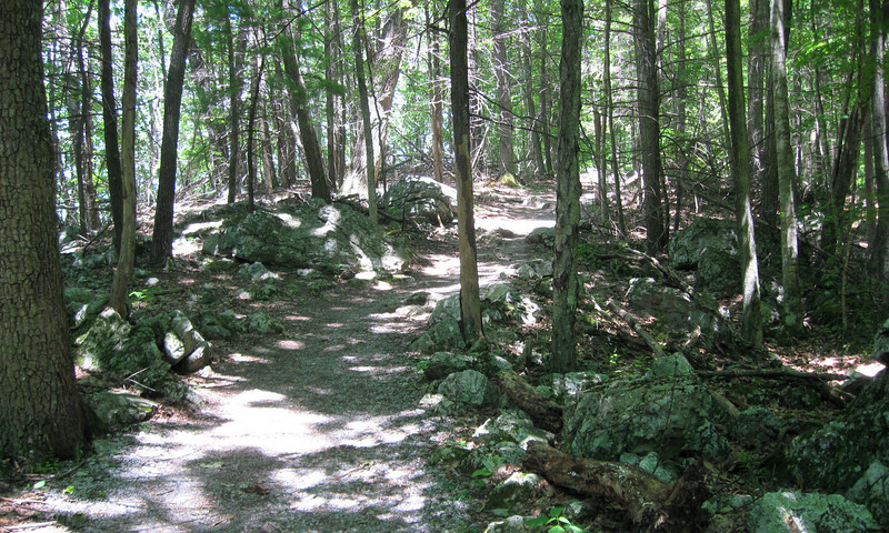 As the trail crosses underneath the cliff face the forest floor becomes littered with boulders of every size which long ago had fallen from the heights above...
