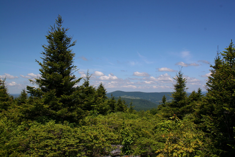 Whispering Spruce Trail