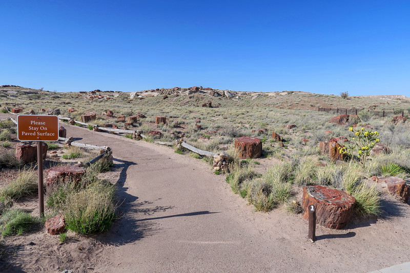 Giant Logs Trailhead