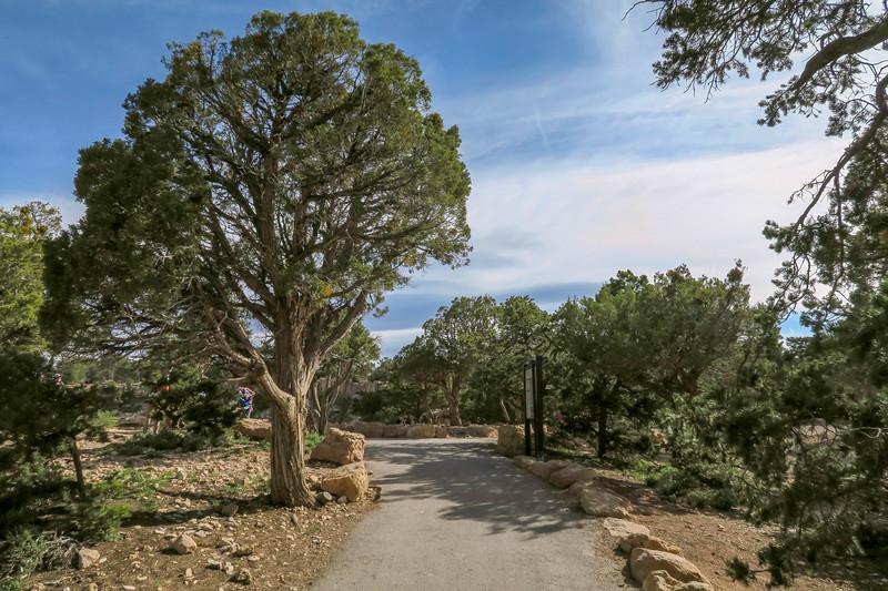 South Kaibab Trail -- 7,200'