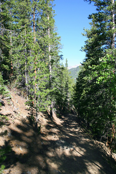 Colorado Trail -- 10,650'