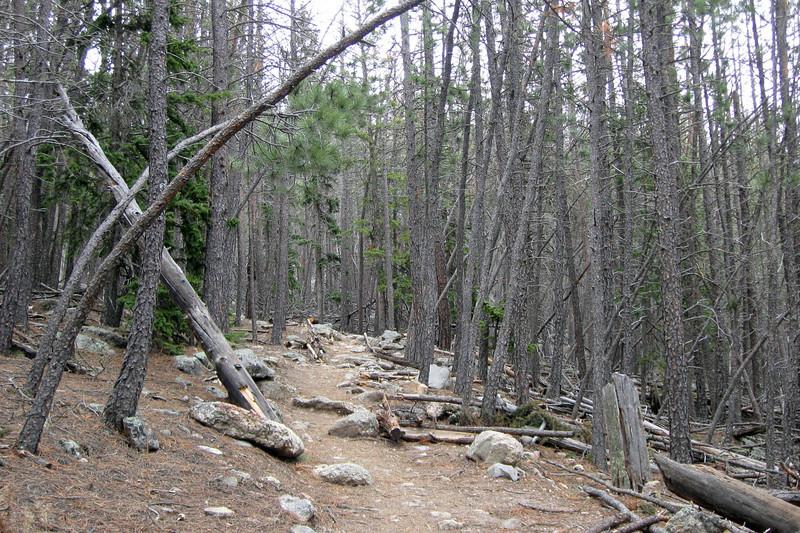Trail #9 - 6,700'