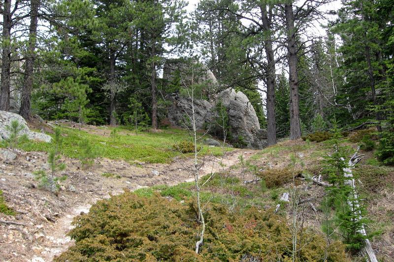 Trail #2b - 6,300'