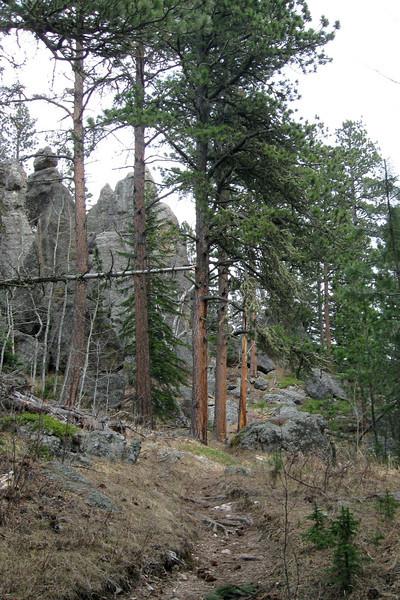 Trail #2b - 6,250'