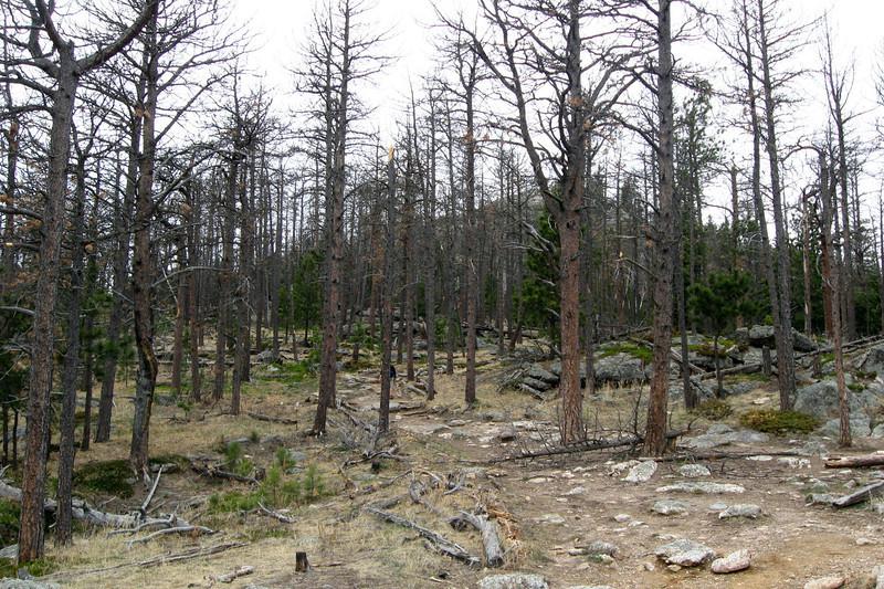 Trail #9 - 6,820'