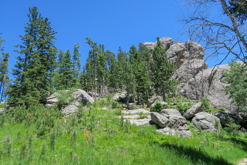 Cathedral Spires/#4 Trail -- 6,220'