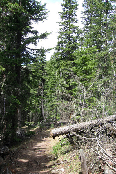 Sunday Gulch Trail - 5,760'
