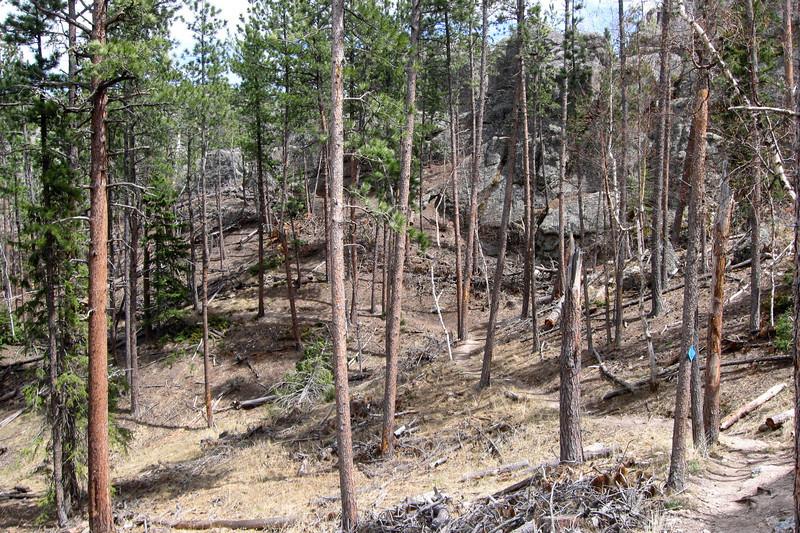 Sunday Gulch Trail - 6,100'
