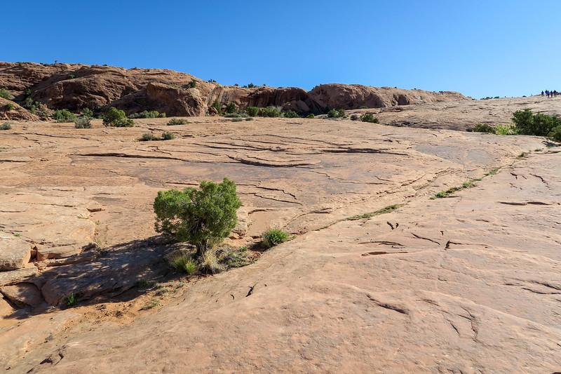 Delicate Arch Trail-- 4,420'