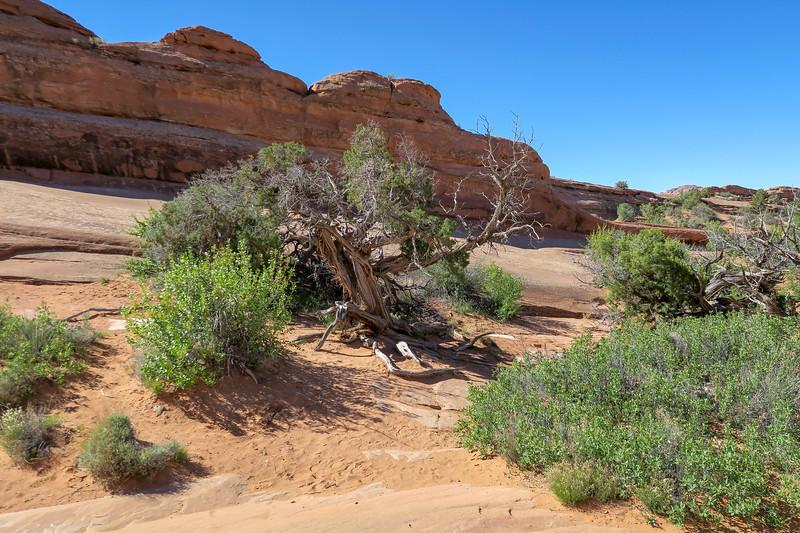 Delicate Arch Trail-- 4,700'