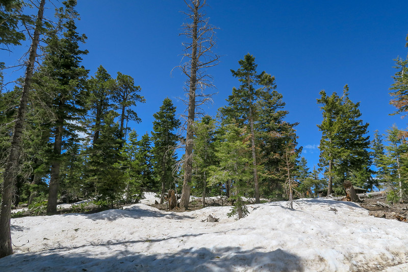 Bristlecone Loop Trail -- 9,120'