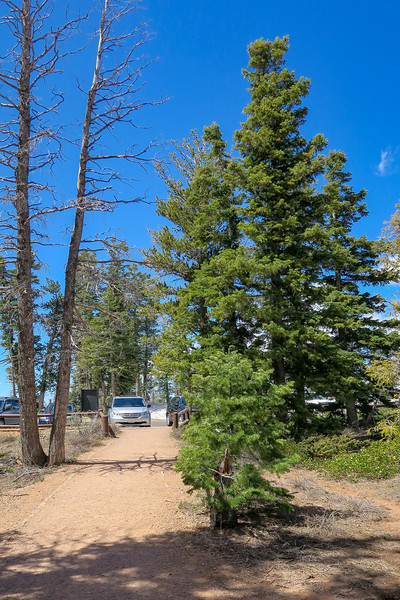 Bristlecone Loop Trailhead -- 9,115'