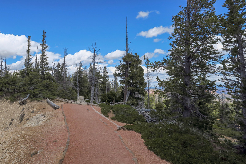 Bristlecone Loop Trail -- 9,040'