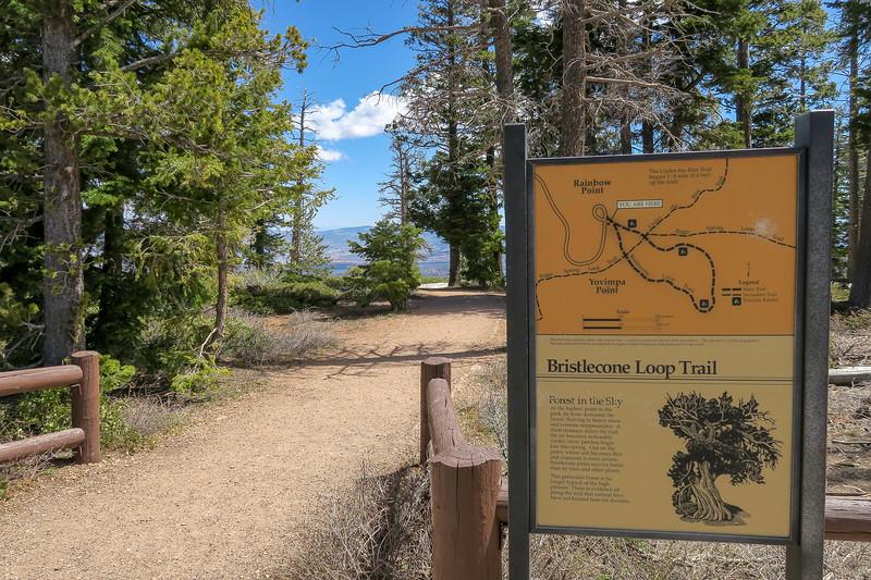 Bristlecone Loop Trailhead -- 9,115'