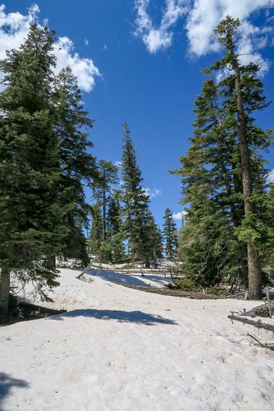 Bristlecone Loop Trail -- 9,100'